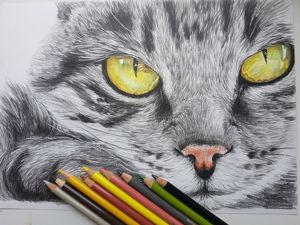 Рисую кота 2. Ярмарка Мастеров - ручная работа, handmade.