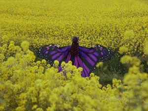 На крыльях бабочки: фантастические костюмы, которые превращают обычных девушек в хрупкие создания. Ярмарка Мастеров - ручная работа, handmade.
