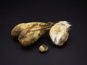 Животный материал в создании ароматов. Ярмарка Мастеров - ручная работа, handmade.