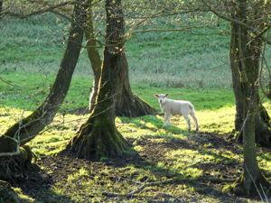Прогулки с овечками. Ярмарка Мастеров - ручная работа, handmade.