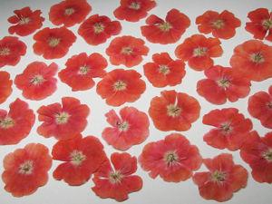 Сухоцветы в наличии на 21.02.19. Ярмарка Мастеров - ручная работа, handmade.