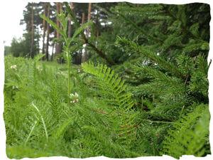 «Чай в лесу»: флакончик леса!!!. Ярмарка Мастеров - ручная работа, handmade.