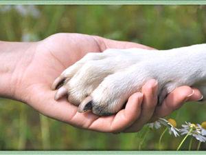 Гаражная распродажа в помощь приюту для животных Дом Добра. Ярмарка Мастеров - ручная работа, handmade.