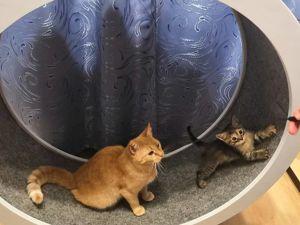 Беговое колесо для кошек!. Ярмарка Мастеров - ручная работа, handmade.