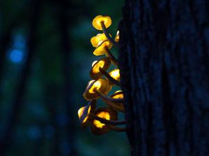 Создаем композицию «Волшебные светящиеся грибы». Часть 2. Ярмарка Мастеров - ручная работа, handmade.
