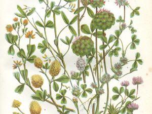 Подарки от  «Листьев травы»  (ч. 1). Ярмарка Мастеров - ручная работа, handmade.