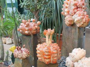 Глиняные кактусы, картины и море тюльпанов на «Репетиции весны». Ярмарка Мастеров - ручная работа, handmade.