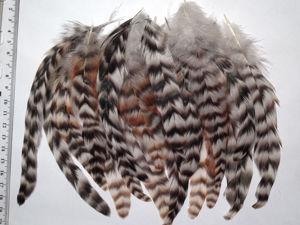 Красивые яркие перья. Ярмарка Мастеров - ручная работа, handmade.