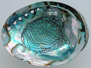 Перламутр- прекрасный житель моря.. Ярмарка Мастеров - ручная работа, handmade.