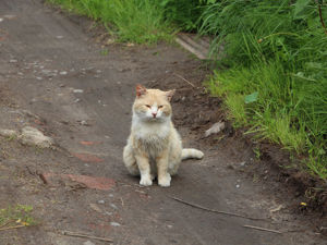 Прогулка с мужем, футболками и с котом!. Ярмарка Мастеров - ручная работа, handmade.