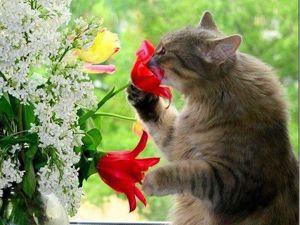 Не пропустите! Завтра! В магазине цветов  «Скидка Выходного Дня»!. Ярмарка Мастеров - ручная работа, handmade.
