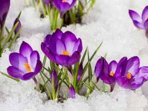 Аукцион подарков « Праздник весны, цветов и любви». Ярмарка Мастеров - ручная работа, handmade.