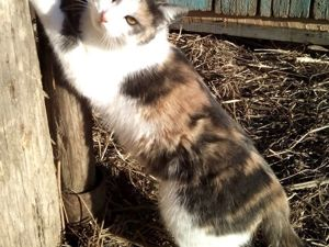 Собачка Мишаня, кошка Муська, ребята и козлята на солнышке. Ярмарка Мастеров - ручная работа, handmade.