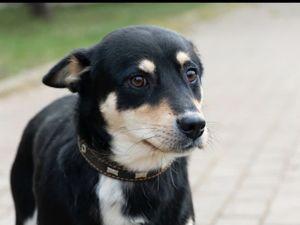 Очаровательные собачки Кожуховского приюта ищут дом. Ярмарка Мастеров - ручная работа, handmade.