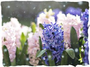 Аукцион на 'Весну под снегом' (завершён). Ярмарка Мастеров - ручная работа, handmade.