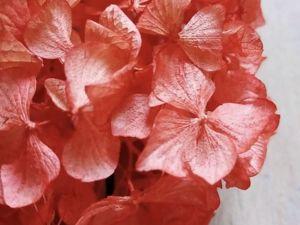 Сухоцветы шапка гортензии. Ярмарка Мастеров - ручная работа, handmade.
