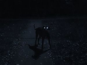 Ночь, улица, фонарь, собака. Ярмарка Мастеров - ручная работа, handmade.