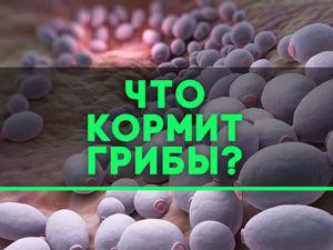 Не кормите ваши грибы!. Ярмарка Мастеров - ручная работа, handmade.