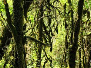 Когда-то мы жили в лесах. Ярмарка Мастеров - ручная работа, handmade.