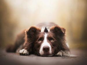 Осторожно, слишком милые песики! Трогательные фотографии собак Кристины Квапиловой. Ярмарка Мастеров - ручная работа, handmade.