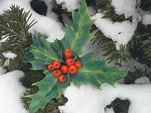 Мастер-класс: рождественская веточка остролиста из фоамирана. Ярмарка Мастеров - ручная работа, handmade.