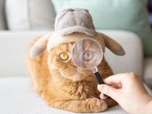 Внимание: кошки в шапочках! Японец Рё Ямазаки валяет головные уборы из шерсти своих котов. Ярмарка Мастеров - ручная работа, handmade.
