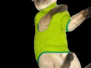 Как кот Барбоскин моделью отказывался быть. Ярмарка Мастеров - ручная работа, handmade.