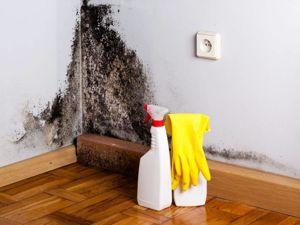Плесень на стенах: что делать?. Ярмарка Мастеров - ручная работа, handmade.