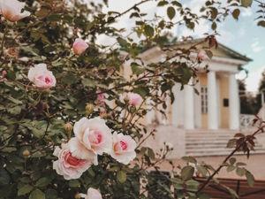 Последние розы в Коломенском. Ярмарка Мастеров - ручная работа, handmade.