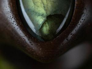 Кольцо из дерева орех с лабрадором и гранатом, видео. Ярмарка Мастеров - ручная работа, handmade.