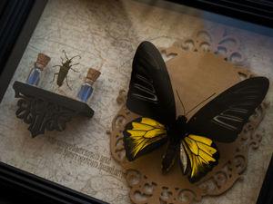 Золотая Птицекрылка и полочка энтомолога. Ярмарка Мастеров - ручная работа, handmade.