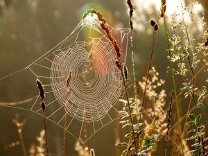 Утерянное искусство — живопись на паутине. Ярмарка Мастеров - ручная работа, handmade.