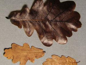 Как быстро законсервировать листья в глицерине. Ярмарка Мастеров - ручная работа, handmade.