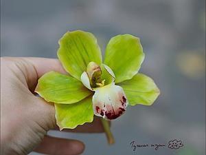 Лепка орхидеи цимбидиум из полимерной глины. Ярмарка Мастеров - ручная работа, handmade.