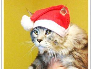 Как быстро и просто сделать новогодний колпак для котика. Ярмарка Мастеров - ручная работа, handmade.