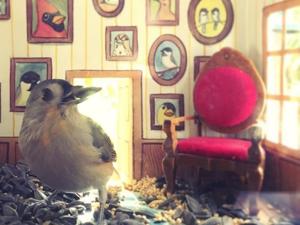 Как пригласить синичку на ужин в романтической обстановке: изящные домики для птиц от художницы Jada Fitch. Ярмарка Мастеров - ручная работа, handmade.