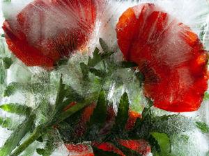 Замороженные во льду 2. Растения, замороженные во льду. Продолжение. Ярмарка Мастеров - ручная работа, handmade.