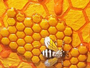 Короб для хранения  «Пчелка на сотах». Ярмарка Мастеров - ручная работа, handmade.