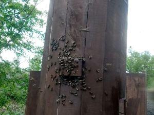 Бортневое пчеловодство. Ярмарка Мастеров - ручная работа, handmade.