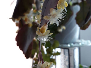 Кактусы бывают разные, или как вырастить  кактус  на северных окнах. Ярмарка Мастеров - ручная работа, handmade.