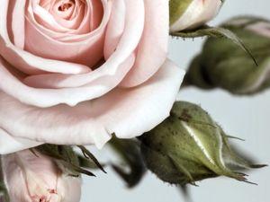Пепельная роза. Ярмарка Мастеров - ручная работа, handmade.