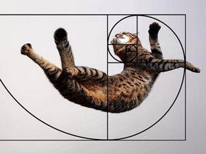 Недостижимый идеал, или Почему мы на самом деле так любим котиков. Ярмарка Мастеров - ручная работа, handmade.
