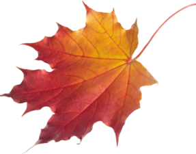 Ярмарка  «Времена года — Осень». Ярмарка Мастеров - ручная работа, handmade.