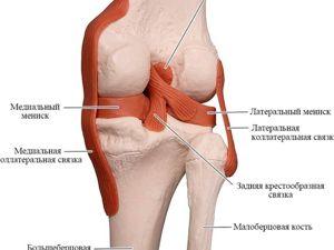 Восстановление коленного сустава. Ярмарка Мастеров - ручная работа, handmade.