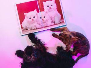 «Пушистые друзья». Подборка фотографий для хорошего настроения. Фото Елены Куликовой. Ярмарка Мастеров - ручная работа, handmade.