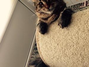 На клубничной грядке выросли котятки!. Ярмарка Мастеров - ручная работа, handmade.