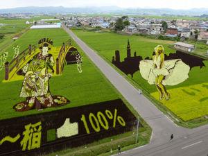 Картины на рисовых полях, меняющиеся каждый год. Ярмарка Мастеров - ручная работа, handmade.