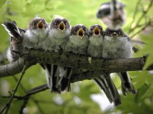 Птицы во всей красе в конкурсе Bird Photographer of the Year 2020. Ярмарка Мастеров - ручная работа, handmade.