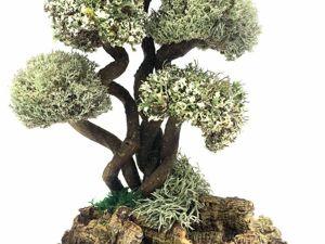 Что Выбрать: Дерево из Цетрарии Или Комнатное Растение. Ярмарка Мастеров - ручная работа, handmade.