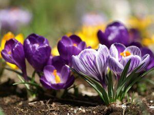 Весна идет к вам с подарками!. Ярмарка Мастеров - ручная работа, handmade.